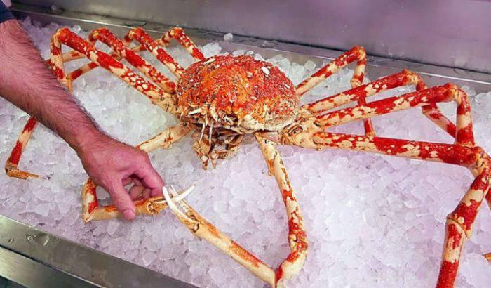 Crabul japonez