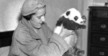 Doamna cu ursulețul: Femeia care a reușit să scoată din China primul urs panda