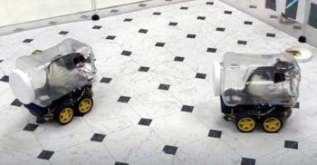 Oamenii de știință au dresat șobolanii să conducă mașini ca să ajungă la mâncare
