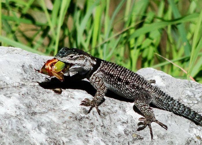 animale insectivore, animale care se hranesc cu insecte