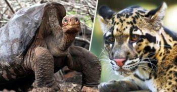În sfârșit, o veste bună! Două specii de animale considerate dispărute au revenit printre noi