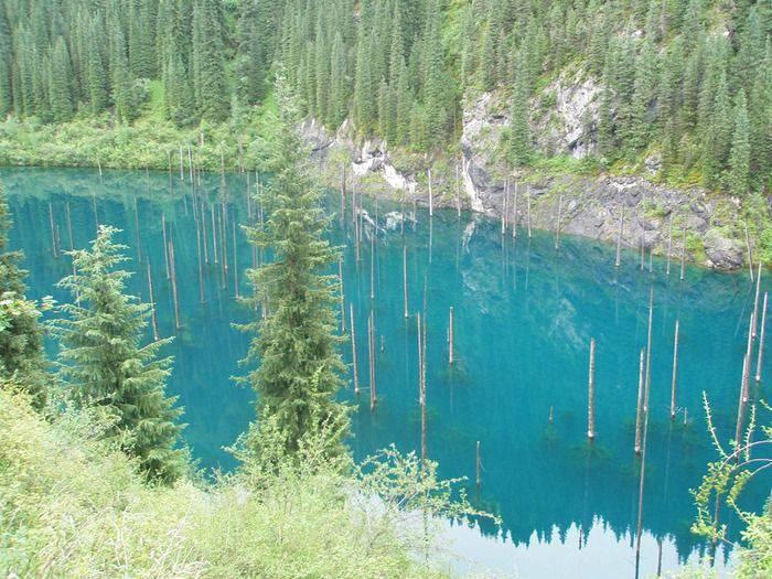 păduri scufundate