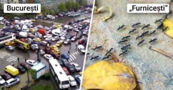 Avem de învățat de la furnici: De ce nu au niciodată blocaje în trafic?