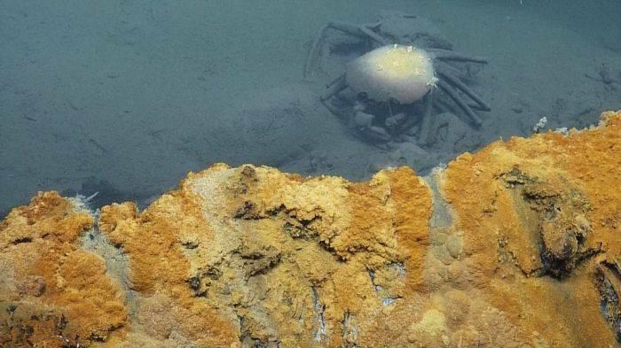 Crab lac sarat