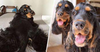 Cloe și Nena, câinii cu gene lungi care fac furori pe rețelele sociale