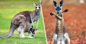 Enigma diapauzei: Cum reușesc animalele să își suspende temporar sarcinile
