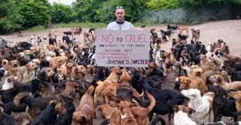 Povestea lui Sasha Pesic, omul care are grijă de peste 750 de câini