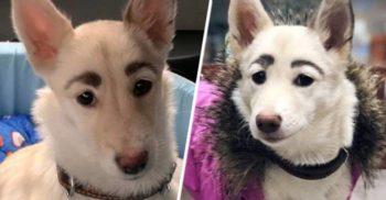 Un câine de la adăpost a fost respins la adopție din cauza sprâncenelor sale perfect arcuite