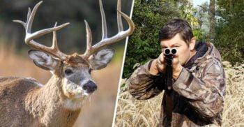 Un vânător a fost spintecat cu coarnele și omorât de un cerb pe care credea că l-a ucis