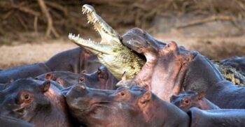 13 cele mai periculoase animale de pe Pământ