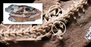 Najash, șarpele cu două picioare care umbla prin negura preistoriei