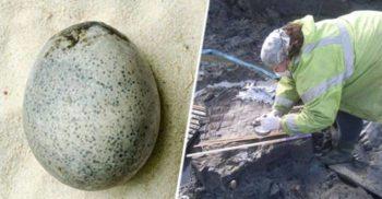 Singurul ou de găină intact de pe vremea romanilor a fost descoperit în Anglia