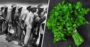 Masacrul Pătrunjelului, un genocid prea puțin cunoscut