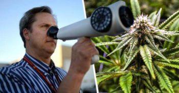 În orașul care pute a marijuana, primăria încearcă să adulmece sursa mirosului