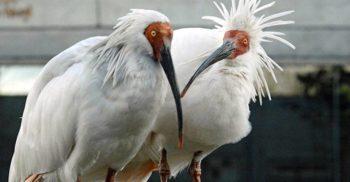 5 păsări misterioase din lumea întreagă