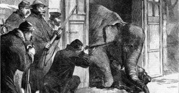 În 1870, parizienii i-au mâncat pe Castor și Pollux, elefanții de la zoo