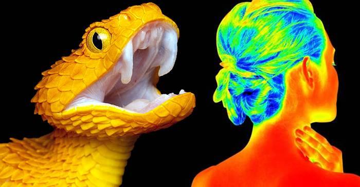5 animale înzestrate cu simțuri ieșite din comun FEATURED_compressed
