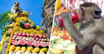 Bufetul Maimuțelor, un festival la care sunt invitați de onoare 3.000 de macaci