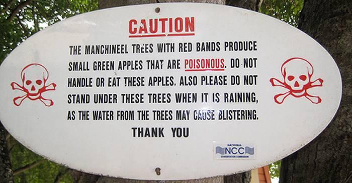 Cel mai periculos copac din lume Mărul morții este atât de toxic, încât nu poți sta sub el când plouă featured_compressed