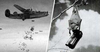 Liliecii explozivi, arma secretă cu care SUA plănuiau să atace Japonia