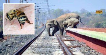 """""""Operațiunea Albina"""": Cum țin indienii elefanții departe de șinele de tren"""