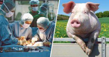 4 moduri nebănuite în care animalele ajută oamenii