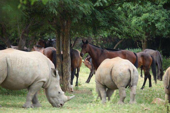 Cai si rinoceri