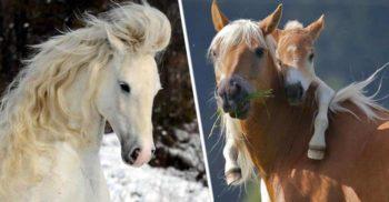 """De ce pot dormi în picioare? 7 curiozități despre cai, primele """"motoare"""" ale omenirii"""