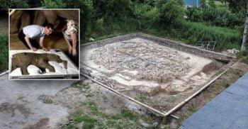 Un misterios cerc din oase de mamut, vechi de 25.000 de ani, a fost descoperit în Rusia