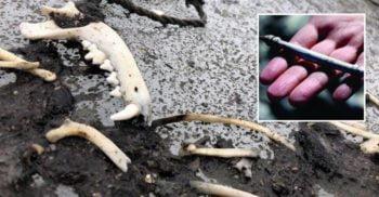"""""""Autostrada"""" vikingilor: Au descoperit sute de artefacte pe un drum străvechi"""