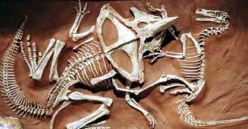 """""""Fotografii"""" din preistorie: 5 fosile de dinozauri ieșite din comun"""