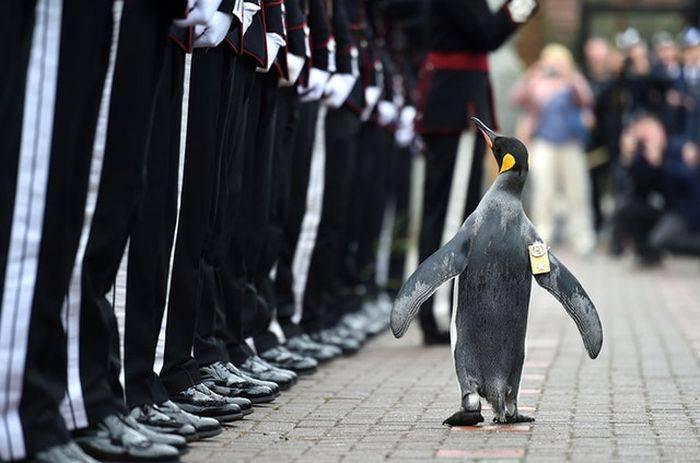 Curiozitati despre Norvegia - pinguin