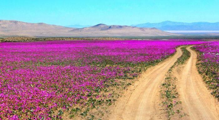 Flori in desert