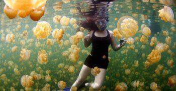 Lacul cu milioane de meduze, paradisul fantomatic al scufundătorilor