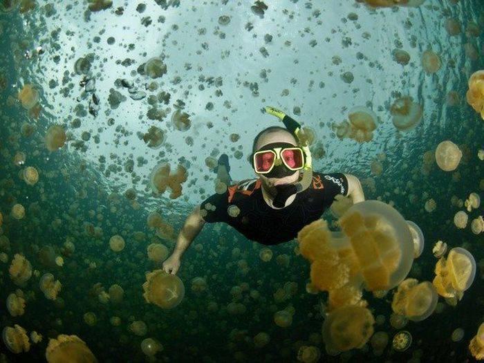 Lacul meduzelor 02