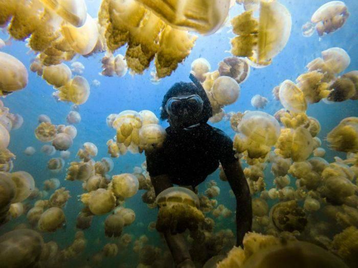 Lacul meduzelor 03