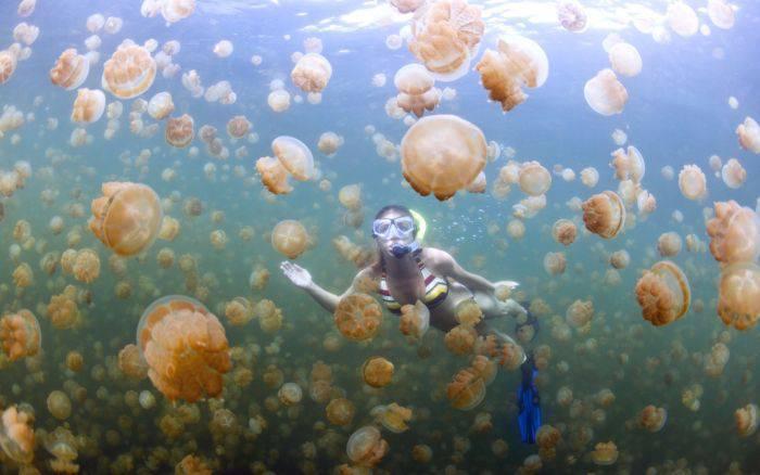 Lacul meduzelor