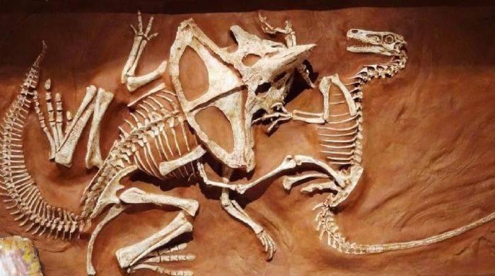 Lupta intre dinozauri 1