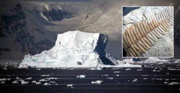 Rămășițele unei păduri luxuriante, descoperite sub gheața din Antarctica