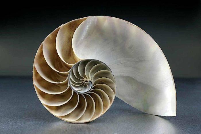 Scoica sirul lui Fibonacci