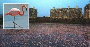 """În lipsa oamenilor, păsările flamingo au """"invadat"""" orașul Mumbai"""