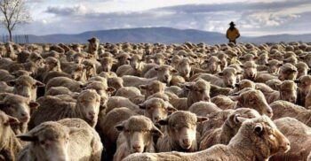 10 curiozități despre Australia, țara cu mai multe oi decât oameni