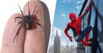 """3 frați s-au lăsat mușcați de văduva neagră """"ca să devină Spider-Man"""""""