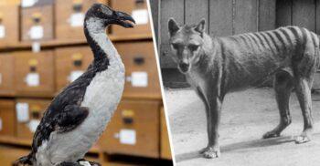 4 specii de animale care au dispărut din cauza prostiei oamenilor