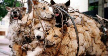 Chinezii se pregătesc să renunțe la consumul de carne de câine și de pisică