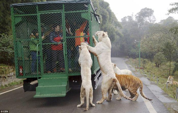 Gradina zoologica China 01
