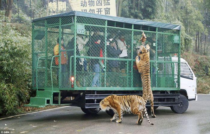 Gradina zoologica China 02