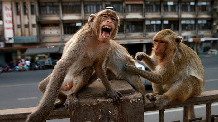 Maimute India