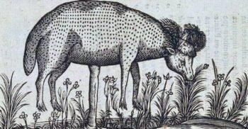 """Mieii care cresc în copaci – Originea bumbacului """"mai alb decât lâna"""""""