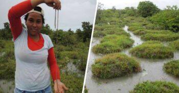 Movilele bizare construite de râmele gigantice de pe fluviul Orinoco